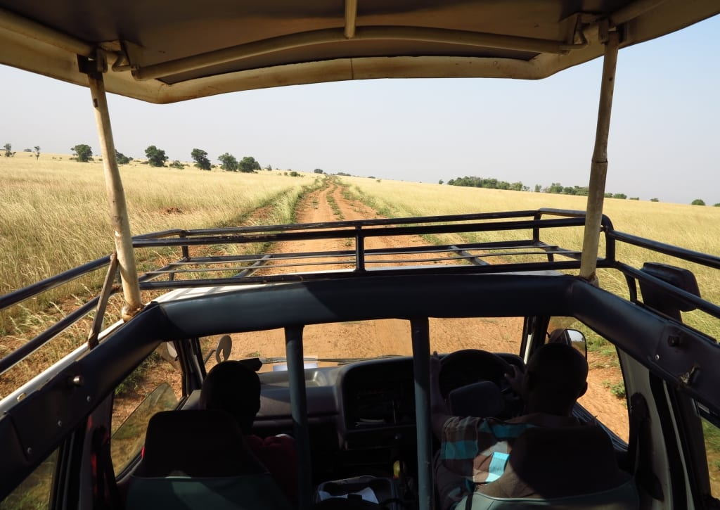 Safari im Murchison Falls National Park in Uganda