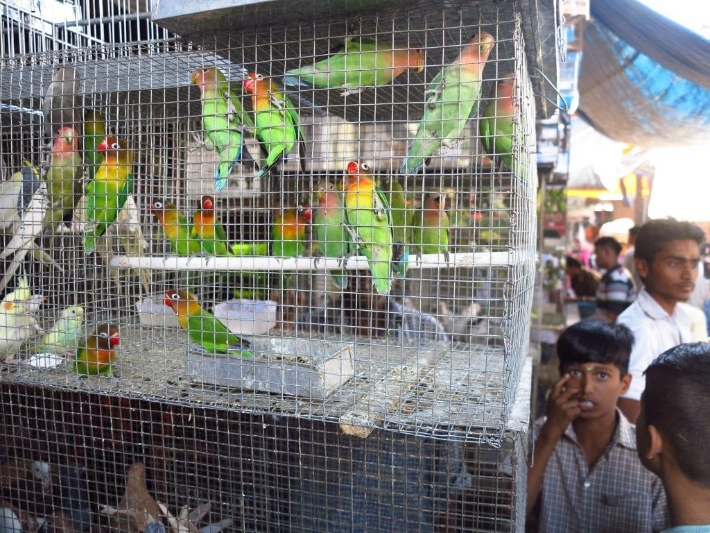 Vogelhändler im Crawford Market in Mumbai
