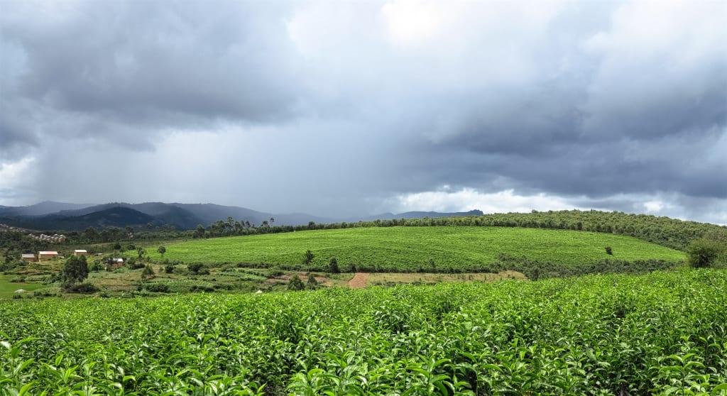 Teeplantagen bei Fianar in Madagaskar