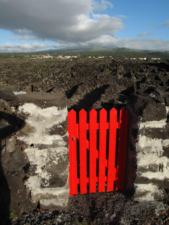 Weinanbaugebiete auf Pico (Azoren)
