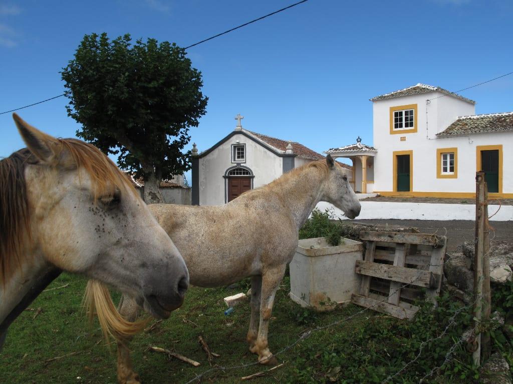 Pferde auf Santa Maria auf den Azoren