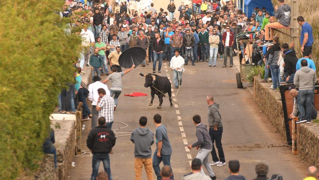 Stierkampf auf den Azoren