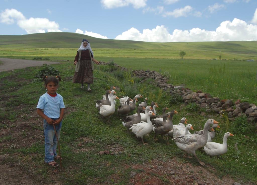 In der Umgebung von Ani in der Türkei